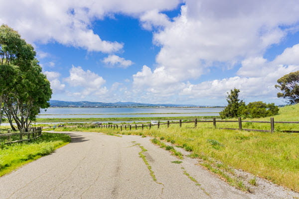 Road with grass and bay in the background.