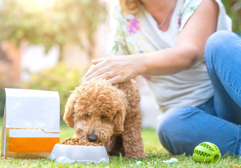 Woman with small dog eating food from a bowl.