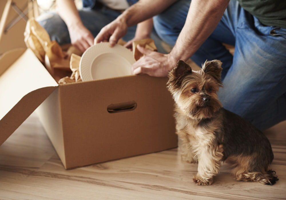 Couple and small dog in an apartment with moving boxes.