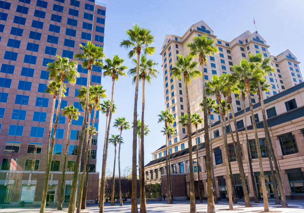 Downtown San Jose with palm trees and office buildings.